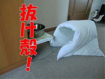 チャンスとティアラ+ココ-20120108-3.jpg