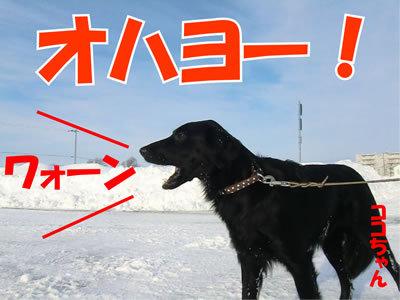 チャンスとティアラ+ココ-20120108-4.jpg