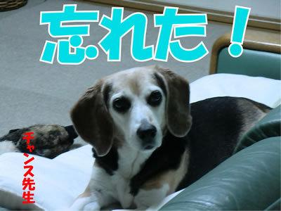 チャンスとティアラ+ココ-20120109-1.jpg