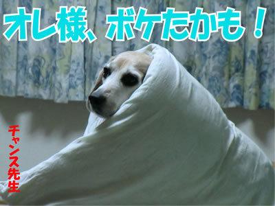 チャンスとティアラ+ココ-20120109-2.jpg