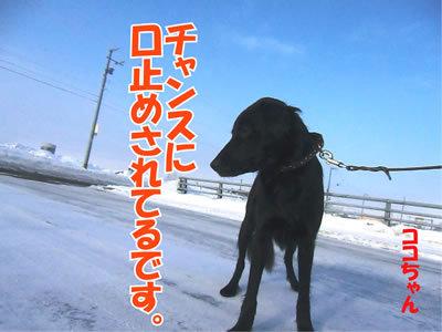 チャンスとティアラ+ココ-20120109-3.jpg