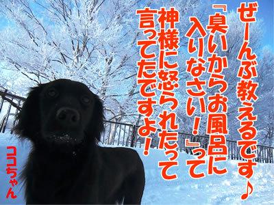 チャンスとティアラ+ココ-20120109-4.jpg