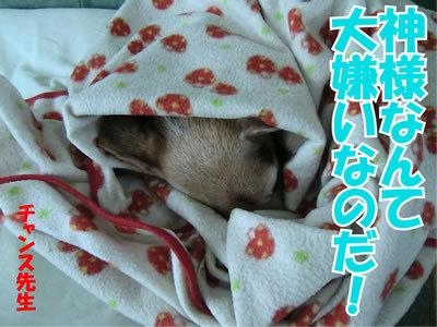 チャンスとティアラ+ココ-20120109-6.jpg