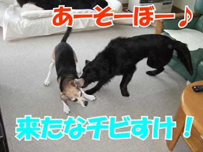 チャンスとティアラ+ココ-20100311-3.jpg