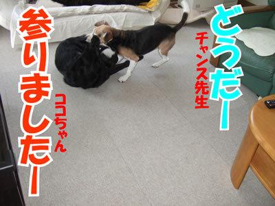 チャンスとティアラ+ココ-20100311-6.jpg