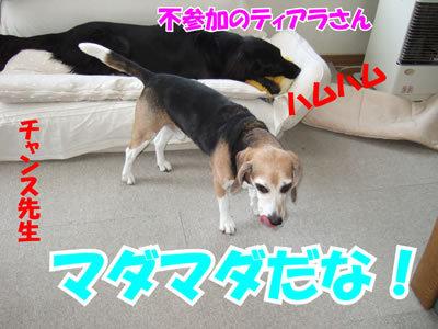チャンスとティアラ+ココ-20100311-7.jpg
