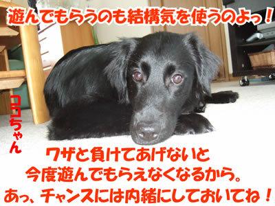 チャンスとティアラ+ココ-20100311-9.jpg