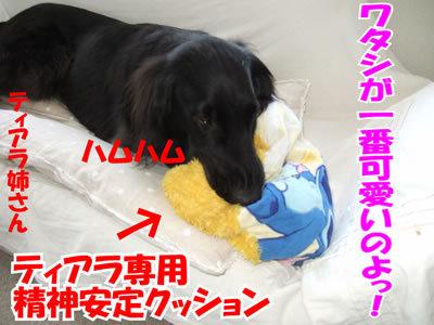 チャンスとティアラ+ココ-20100311-10.jpg