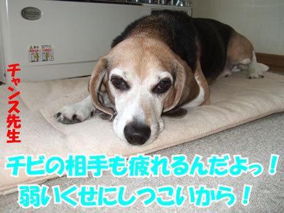 チャンスとティアラ+ココ-20100311-11.jpg