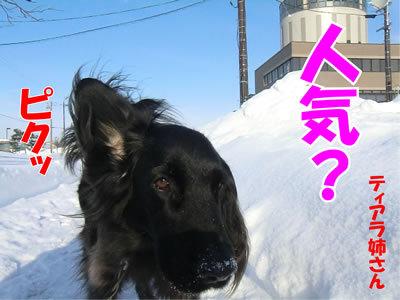 チャンスとティアラ+ココ-20120110-1.jpg