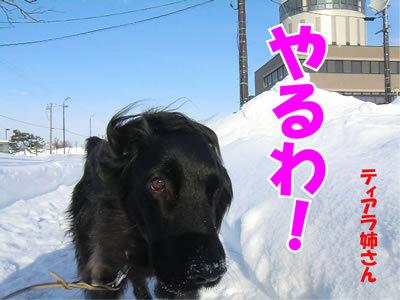 チャンスとティアラ+ココ-20120110-2.jpg