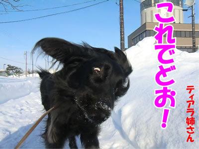 チャンスとティアラ+ココ-20120110-3.jpg