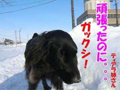 チャンスとティアラ+ココ-20120110-4.jpg