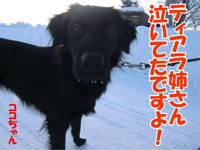 チャンスとティアラ+ココ-20120110-5.jpg