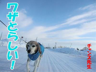 チャンスとティアラ+ココ-20120110-6.jpg