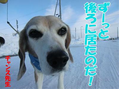 チャンスとティアラ+ココ-20120110-7.jpg