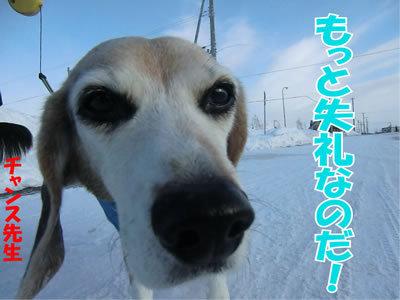 チャンスとティアラ+ココ-20120110-8.jpg