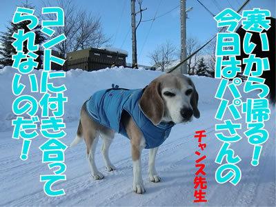 チャンスとティアラ+ココ-20120110-9.jpg