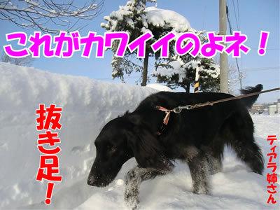 チャンスとティアラ+ココ-20120111-2.jpg