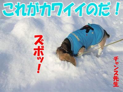 チャンスとティアラ+ココ-20120111-3.jpg