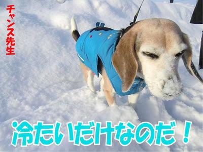 チャンスとティアラ+ココ-20120111-4.jpg