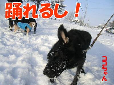 チャンスとティアラ+ココ-20120111-6.jpg