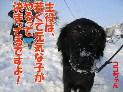 チャンスとティアラ+ココ-20120111-8.jpg