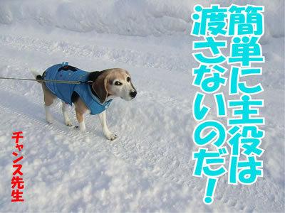 チャンスとティアラ+ココ-20120111-10.jpg