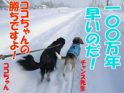 チャンスとティアラ+ココ-20120111-11.jpg