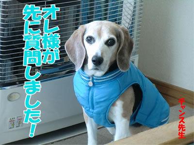 チャンスとティアラ+ココ-20120112-2.jpg