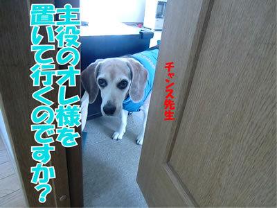 チャンスとティアラ+ココ-20120112-3.jpg