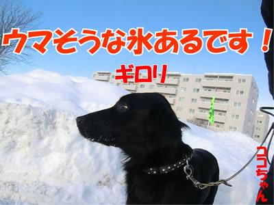 チャンスとティアラ+ココ-20120112-5.jpg