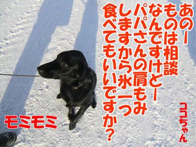 チャンスとティアラ+ココ-20120112-6.jpg