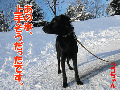 チャンスとティアラ+ココ-20120112-7.jpg
