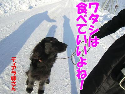 チャンスとティアラ+ココ-20120112-8.jpg