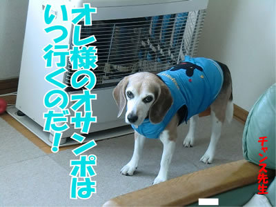 $チャンスとティアラ+ココ-20120112-11.jpg