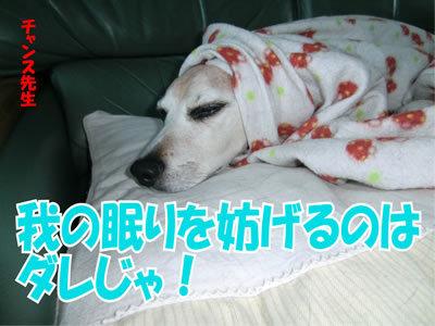 チャンスとティアラ+ココ-20120113-1.jpg