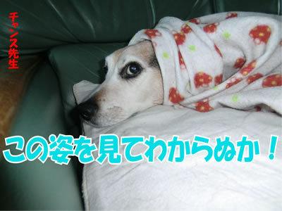 チャンスとティアラ+ココ-20120113-2.jpg