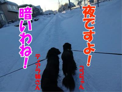 チャンスとティアラ+ココ-20120113-3.jpg