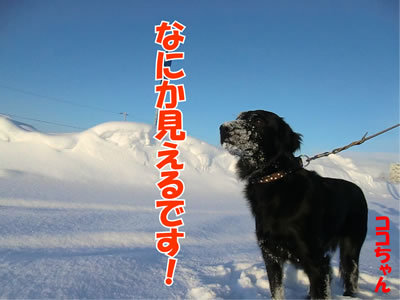 チャンスとティアラ+ココ-20120113-4.jpg