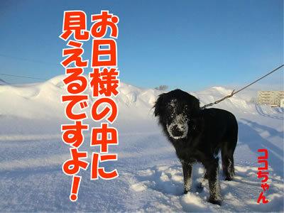 チャンスとティアラ+ココ-20120113-5.jpg
