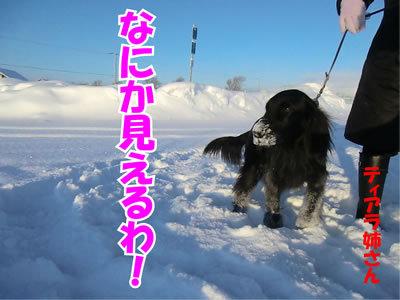 チャンスとティアラ+ココ-20120113-7.jpg
