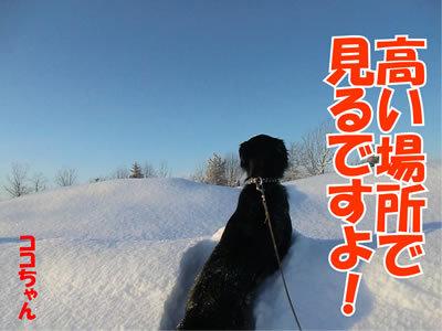 チャンスとティアラ+ココ-20120113-9.jpg