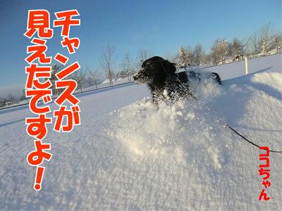 チャンスとティアラ+ココ-20120113-10.jpg