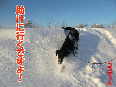 チャンスとティアラ+ココ-20120113-12.jpg