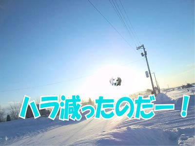 チャンスとティアラ+ココ-20120113-15.jpg