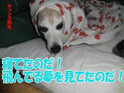 チャンスとティアラ+ココ-20120113-16.jpg