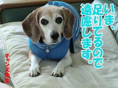 チャンスとティアラ+ココ-20120114-3.jpg