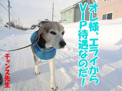 チャンスとティアラ+ココ-20120114-5.jpg