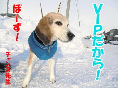チャンスとティアラ+ココ-20120114-6.jpg